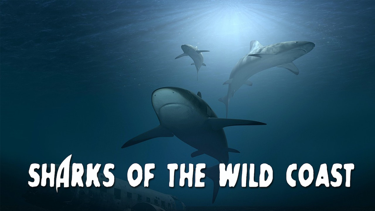 Sharks of the Wild Coast