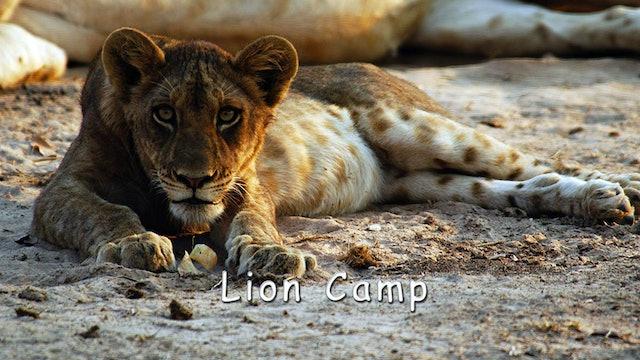 WZ02 - Lion Camp