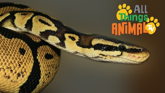 All Things Animal : Snakes