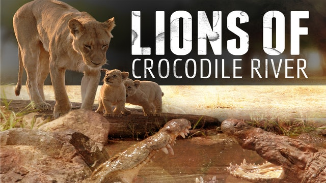 Lions of Crocodile River