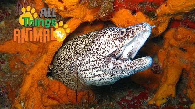 All Things Animal : Eels