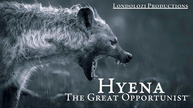 Hyena: The Great Opportunist
