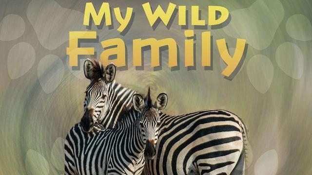 MWF202 - Baby Zebra