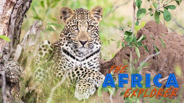 AE13 - Kruger National Park