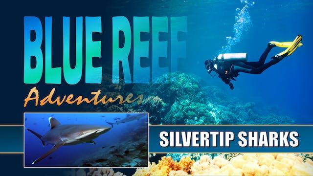 BRA10 - Silvertip Sharks