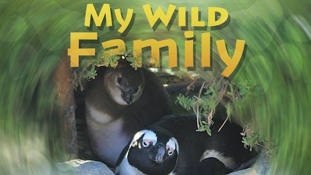 MWF110 - Baby Penguin