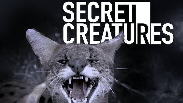 Secret Creatures