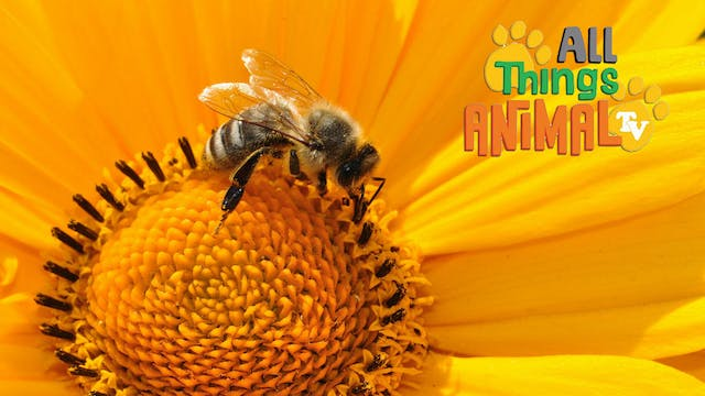 All Things Animal : Bees