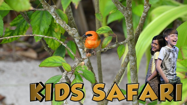 SEYCHELLES KIDS SAFARI - THE FOREST