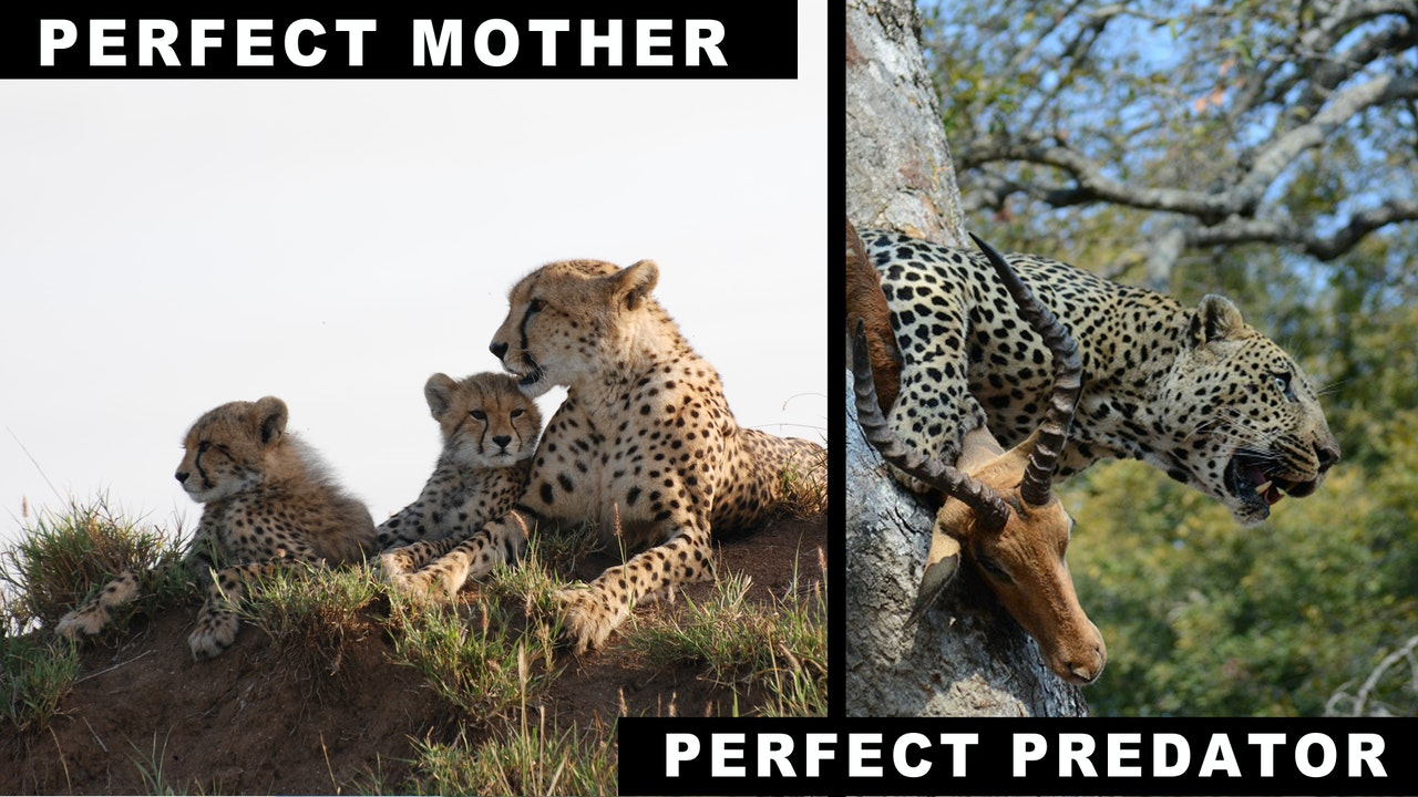 Perfect Mothers, Perfect Predators