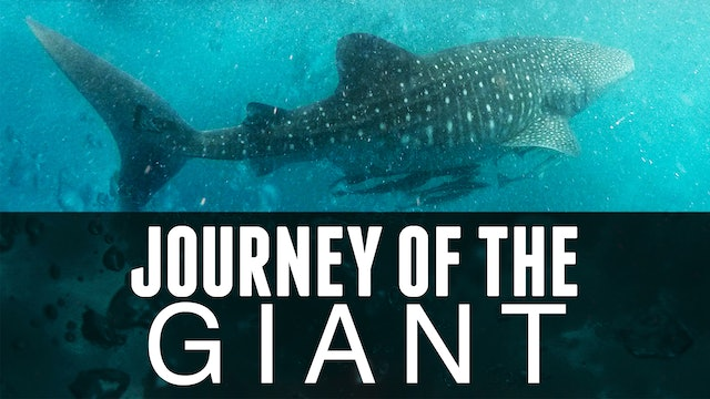 Journey of the Giant