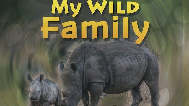 MWF201 - Baby Rhino