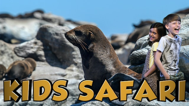 OCEAN KIDS SAFARI - SEALS