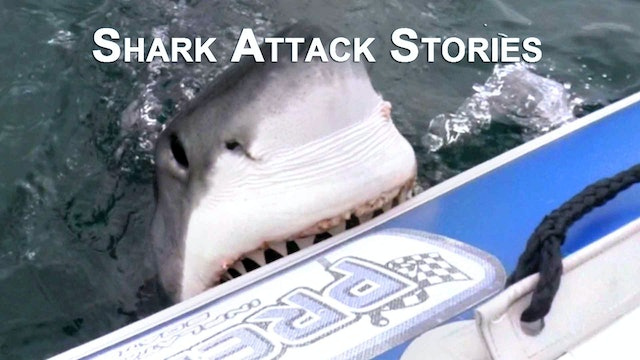 Shark Attack Stories
