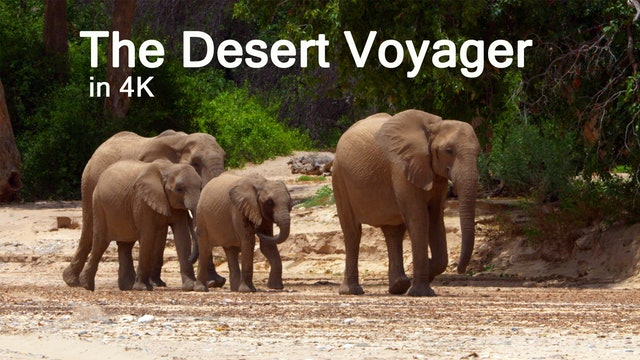 The Desert Voyager
