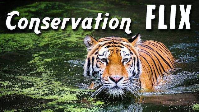 Conservation Flix