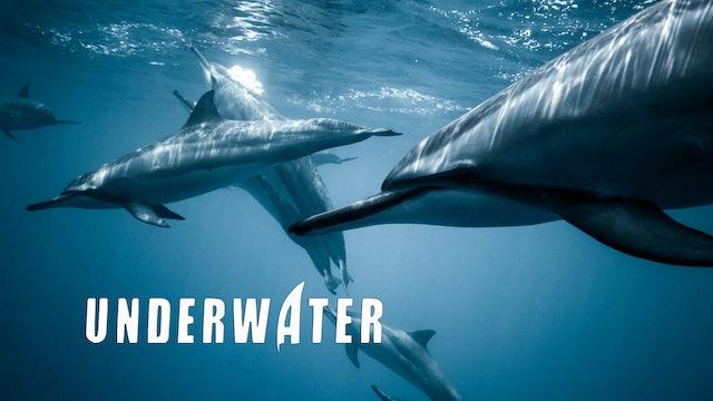 Ocean & Underwater Shorts