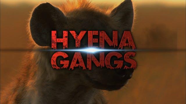 Hyena Gangs