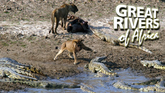 GROA03 - Luangwa river of extremes.