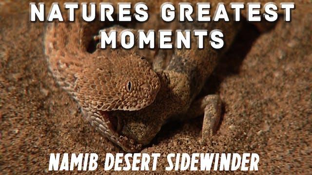 NGM201 - Namib Desert Sidewinder