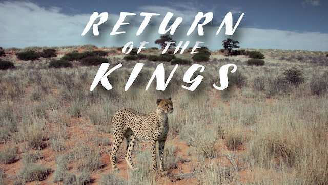 The Return Of The Kings