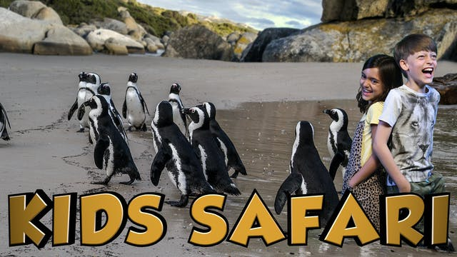 OCEAN KIDS SAFARI - PENGUINS