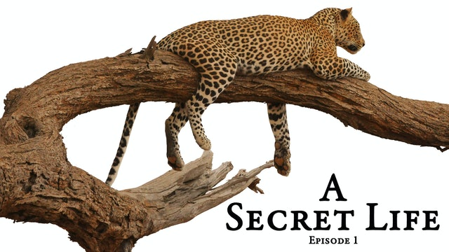 A Secret Life - Part 1