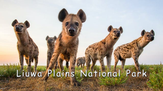 WZ08 - Liuwa Plains National Park