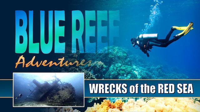 BRA12 - Wrecks of the Red Sea