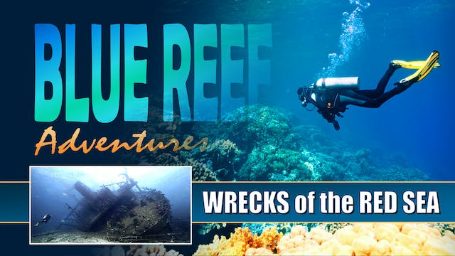 BRA12 - Wrecks of the Red Sea