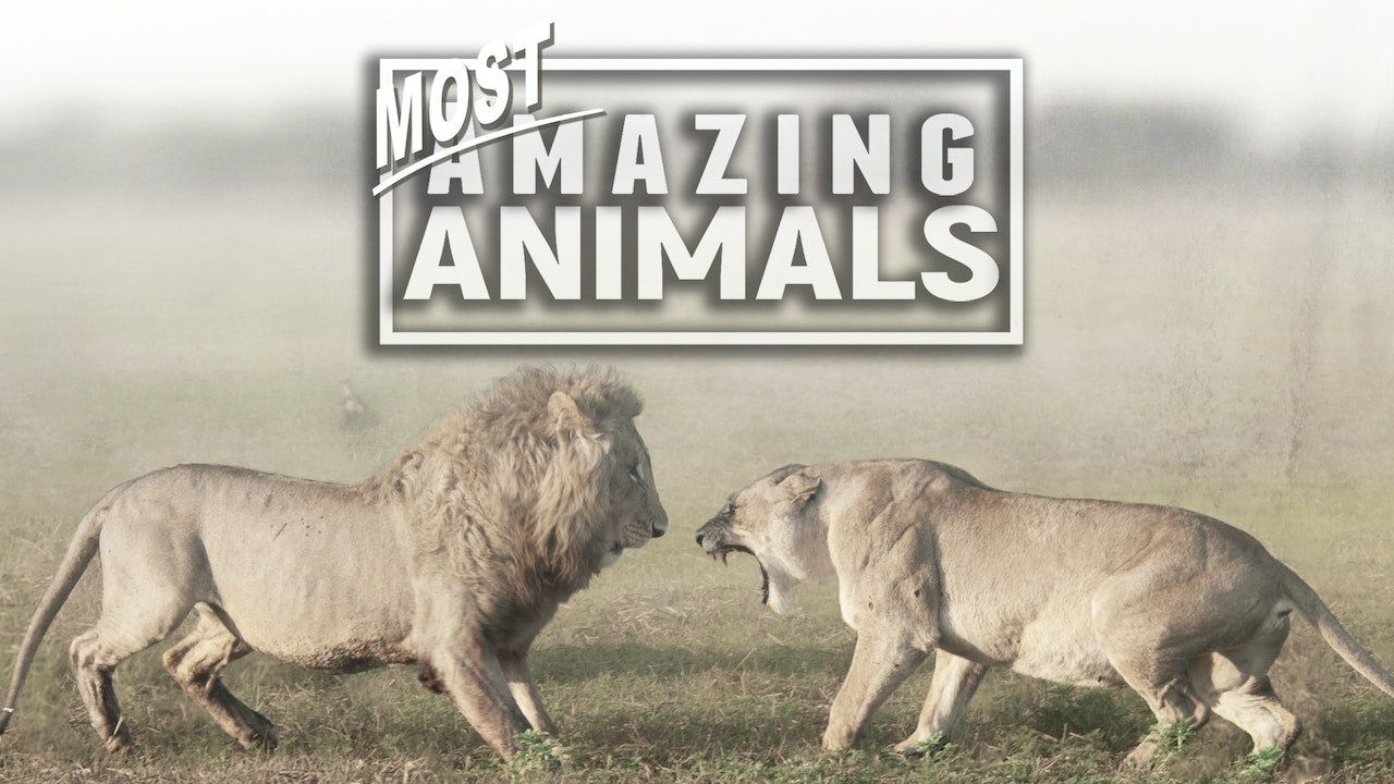 Most Amazing Animals