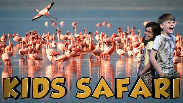 SA KIDS SAFARI -  THE FLAMINGOS