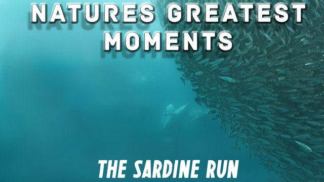 NGM105 - The Sardine Run