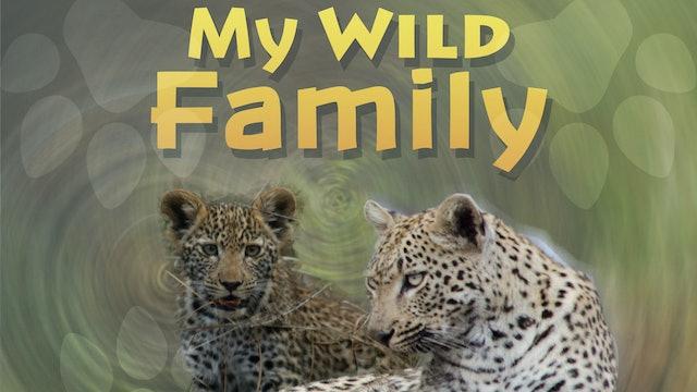 MWF209 - Baby Leopard
