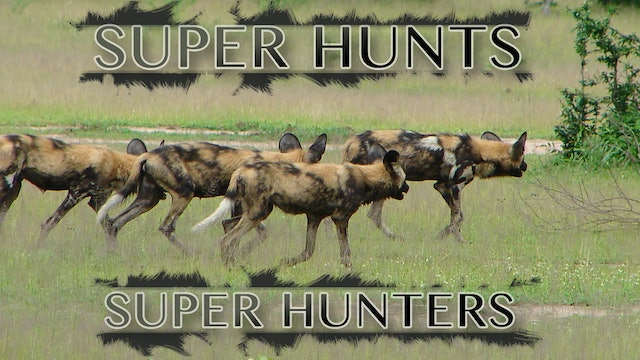 Super Hunts Super Hunters