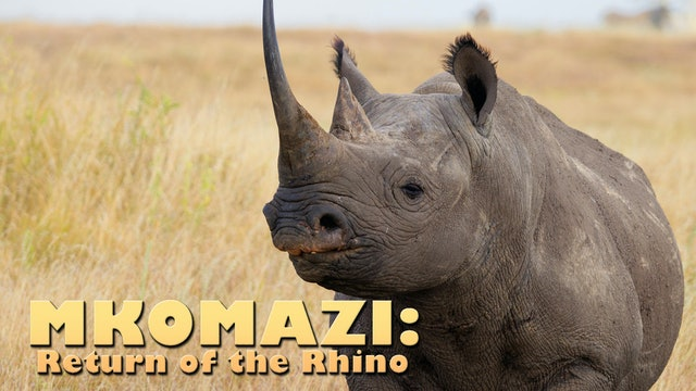 MKOMAZI: Return of the Rhino
