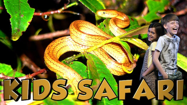 KIDS SAFARI MADAGASCAR - REPTILES & A...