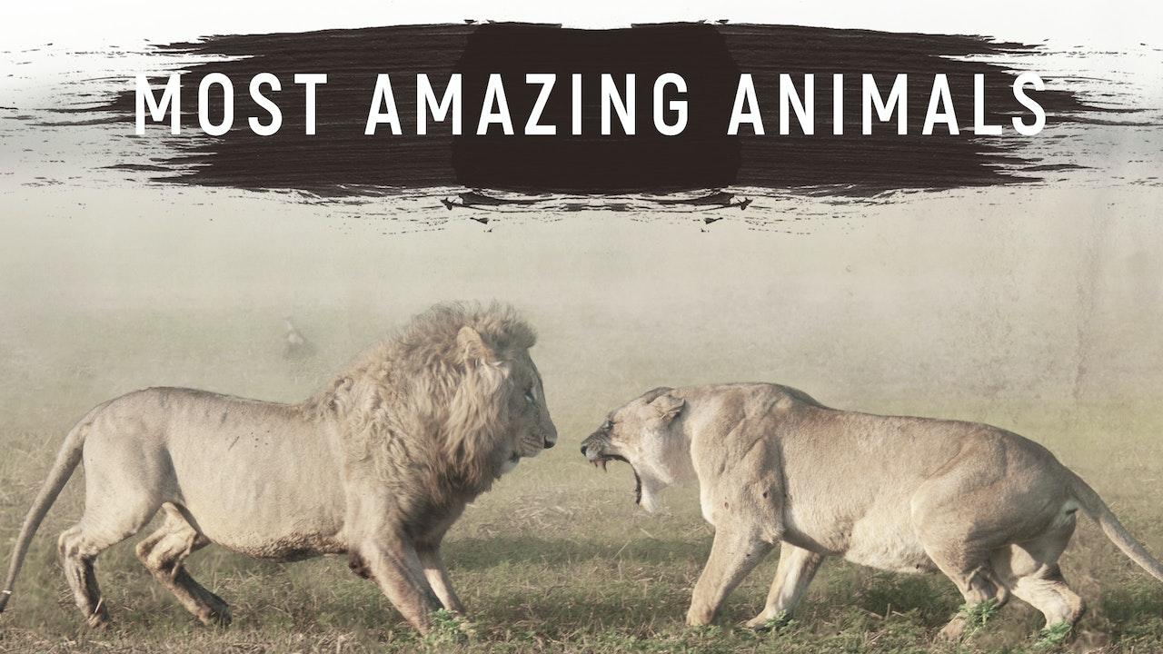 Most Amazing Animals