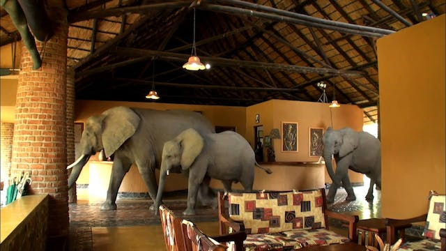 The Elephants that came to Dinner