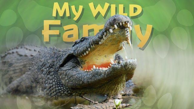 MWF102 - Baby Crocodile