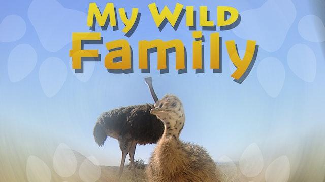 MWF204 - Baby Ostrich