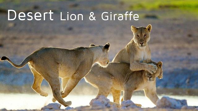 DESERT LION & GIRAFFE