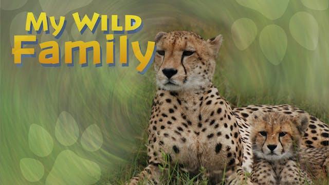 MWF208 - Baby Cheetah