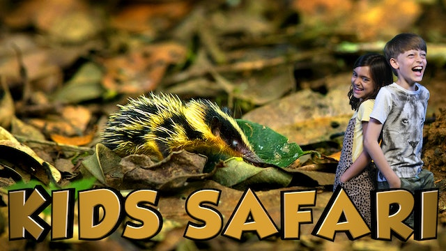 KIDS SAFARI MADAGASCAR -  NIGHT CREATURES
