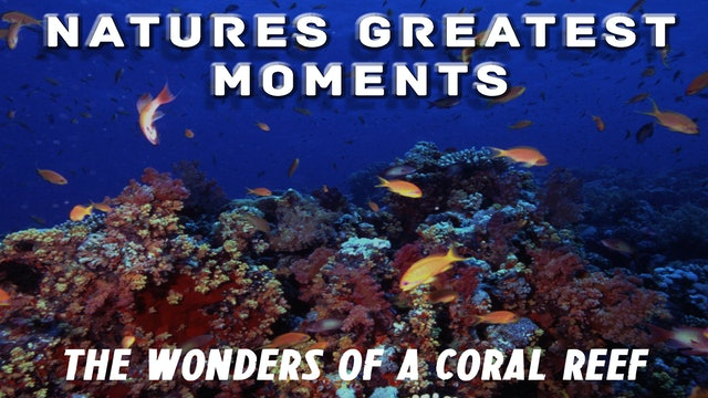 NGM204 - Wonders of the Coral Reef