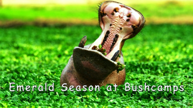 WZ03 - Emerald Season at Bushcamps