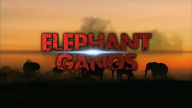Elephant Gangs