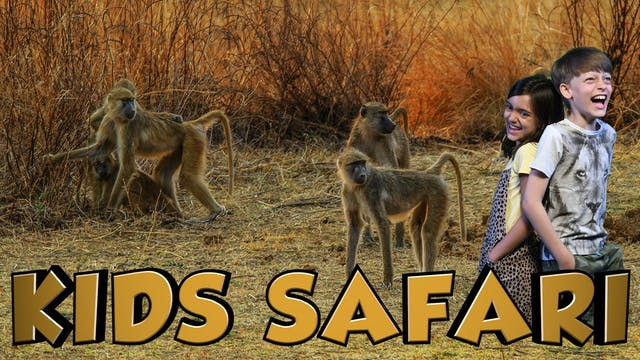 MALA MALA KIDS SAFARI - BABOONS AND B...