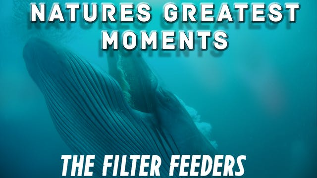 NGM106 - The Filter feeders