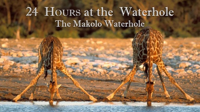 24-1 : The Makolo Waterhole